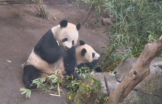 Mr. Wu und Mama Bai Yun