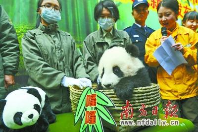 Panda-Mama entschied sich für Long Long