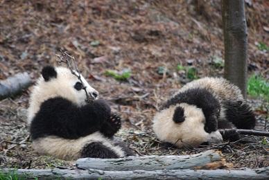 Shen Bin gebar Zwillinge