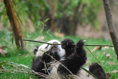 Der unbeschwerte Tag der Panda-Kinder