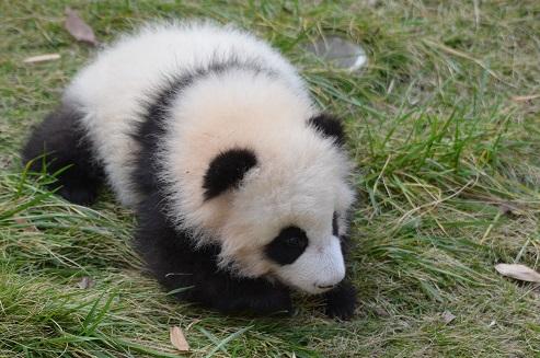 Panda BB-Haus