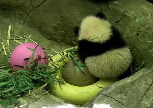 Bao Bao erobert die Herzen