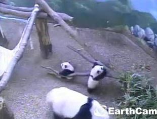 Aus Zoo Atlanta