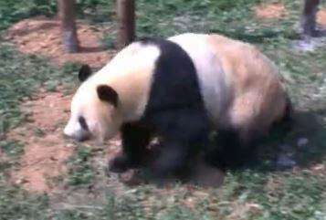 Si Jia aus Yunnan Park