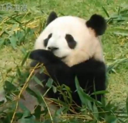 再见,心心 ! Zai jian, Xin Xin!
