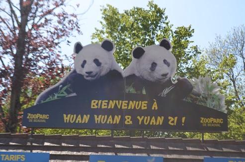 Huan Huan künstlich befruchtet
