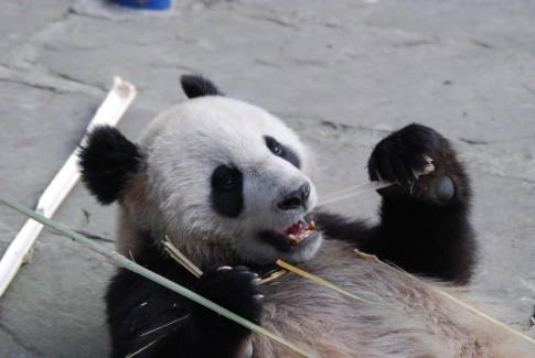 Experten Tagung in Dujiangyan
