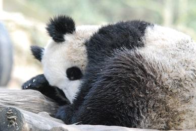 Panda-Zentrum Nachrichten