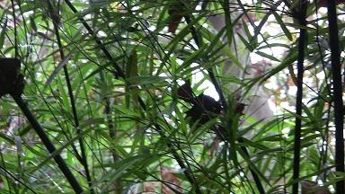 Spuren vom Großen Panda in Pingshan