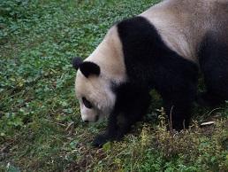 Gute Stimmung im Suzhou Park
