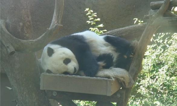 Aus San Diego Zoo