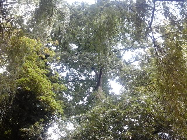 Wanglang National Nature Reserve
