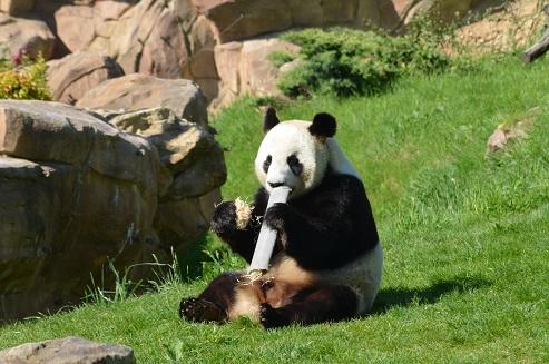 Huan Huan & Yuan Zi senden Grüße