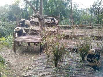 Mei Lan und Freunde grüßen