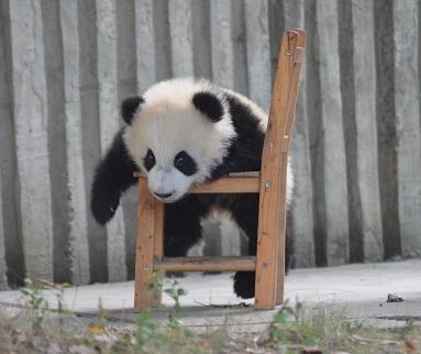 Eroberung des Stuhls