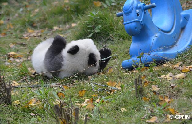 Panda-Baby und sein Pferdchen