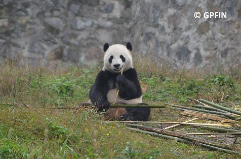 Yun Zi lebt jetzt in Shijiazhuang