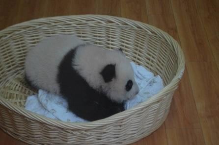 Feng Yi gebar ein Baby