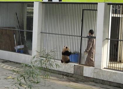 Schutz für Große Pandas