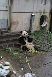 zhu yun1