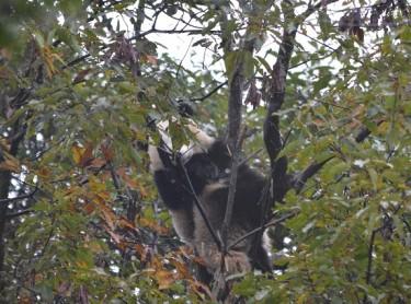 Xi Le lebt in Tianjin Zoo