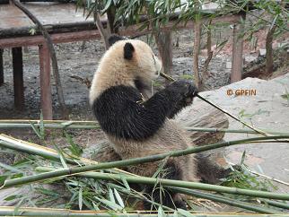 Yao Xin in neuem Zuhause