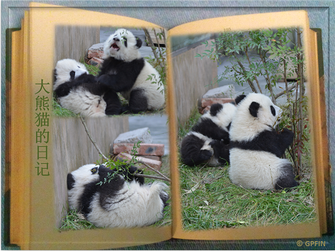 Einige Fakten über Große Pandas