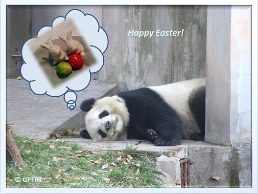 Giant Pandas: Happy Easter!