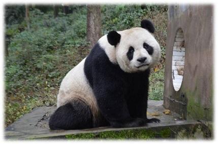 Yi Bao