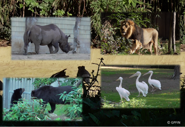 GPFIN: Zootage Frankfurt
