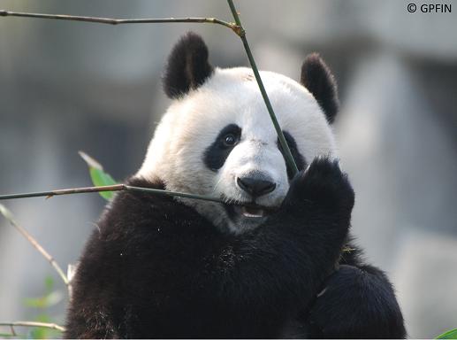 Shu Xiang wieder in Sichuan