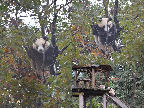 Herbstimpressionen: Bi Feng Xia Base