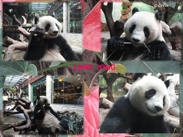 Mama Long Long