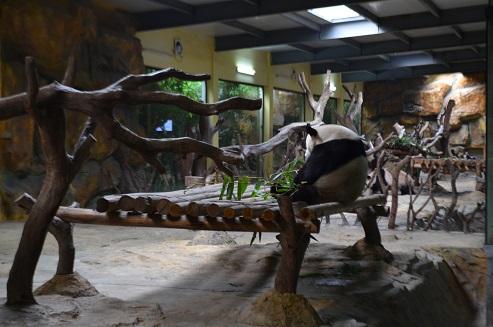 Neues aus Chimelong Safari Park