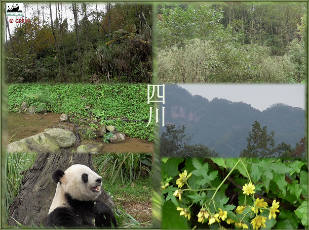 Bao Bao wird ab 2017 in China leben