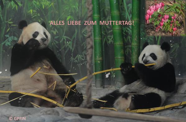 Giant Panda: Muttertag