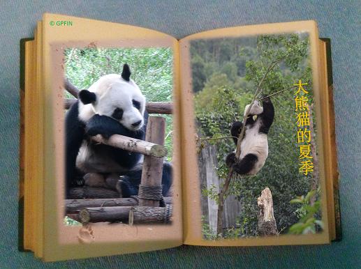 Sommer bei Großen Pandas