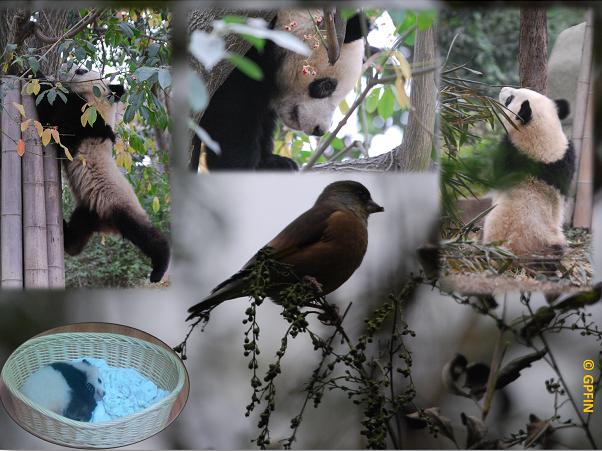 World Animal Day – Welttiertag