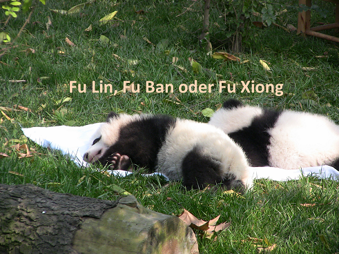 Fu Lin oder Fu Xiong oder Fu Ban?