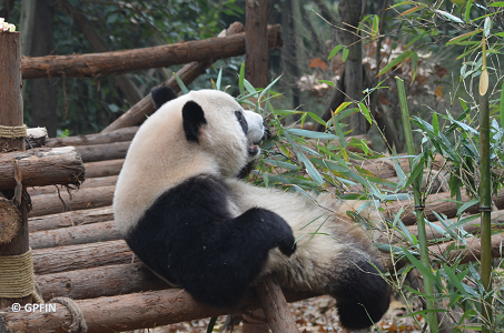 Große Pandas – einige Nachrichten