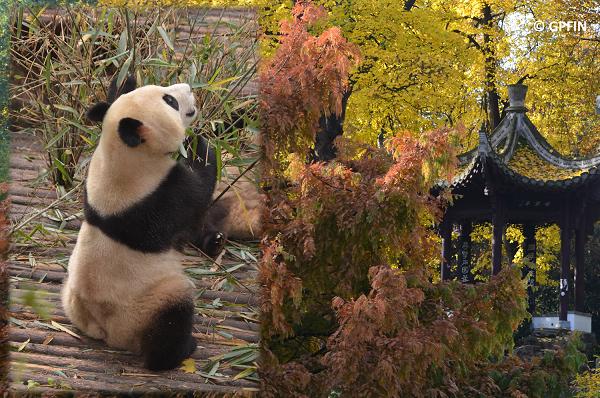 Panda Reise