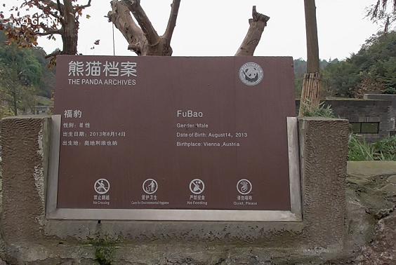 Fu Bao – hübscher Sohn von Long Hui