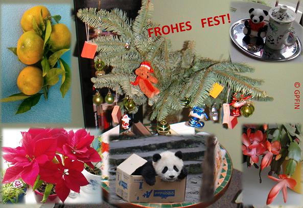 Giant Pandas: Merry Christmas!