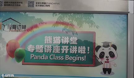 Giant Pandas: Kleines Wissen