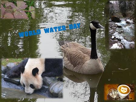 Giant Panda: World Water Day