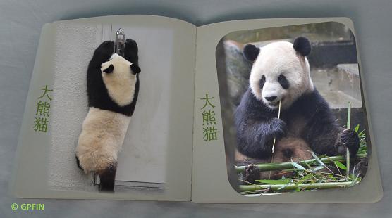 Plaudereien mit Großem Panda