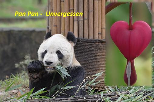 Giant Panda: 清明节
