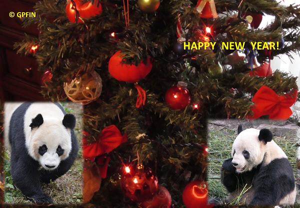 Giant Pandas wünschen Happy New Year!