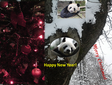 Giant Pandas: Frohe Festtage!