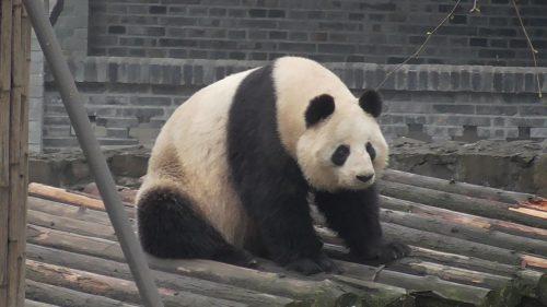 Shu Lan